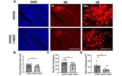 Hyperbaric oxygen therapy alleviates vascular dysfunction and amyloid burden in an Alzheimer's disease mouse model and in elderly patients